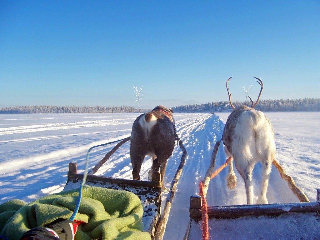 reindeer rides in lapland